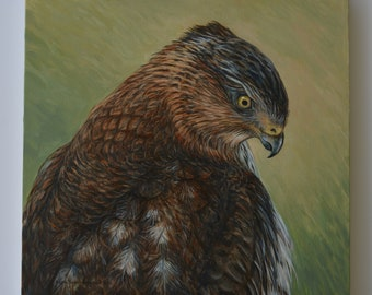 Oil Painting ~ Cooper Hawk Portrait