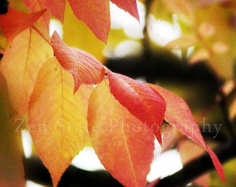 Fall Colors Autumn Photography. Fall Leaves Fine Art Print Autumn Decor. Gold, Orange, Red and Yellow Nature Photo Wall Decor. Autumn Decor.