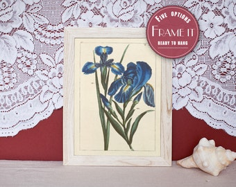 "Vintage illustration of Irises - framed fine art print, flower art, home decor 8""x10"" ; 11""x14"", FREE SHIPPING - 134"