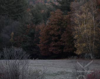 Coyotes in Meadow, Montague, Western Massachusetts