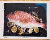 Limited edition Snapper c...