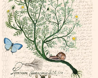 Botanical print, botanical printable, antique botanical prints, vintage botanical print, botanical poster, art collage