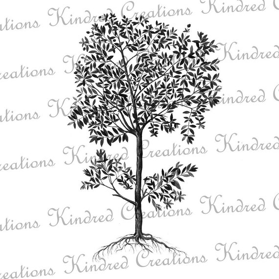 tree with roots 300 dpi digital image download transfer for t