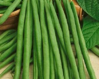 50 Bean Seeds Bush Bean Top Crop Garden Seeds