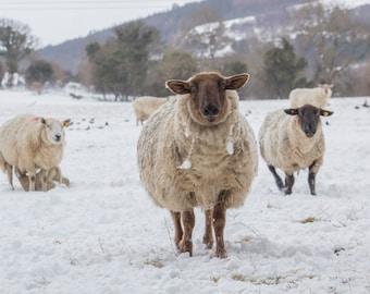 Can we Help Ewe