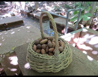 Classic Nuts (PECAN: 1 POUND of New Mexico in-the-shell Pecans Organically Grown, Spring Water Irrigation, 2017 Harvest) FRESH & Flavorful!