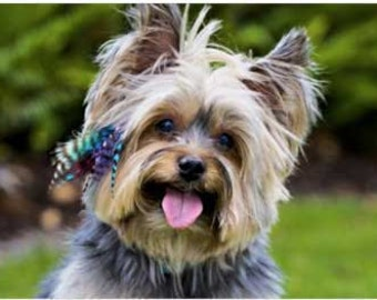 Pet Locks -- Feather FUR Extensions for your Pet -- YOU Choose Colors  (includes beads) :)