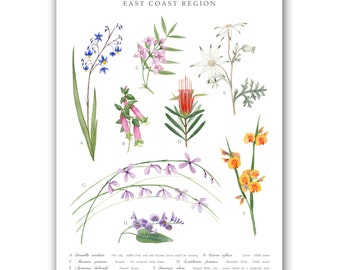 Wildflowers Of Australia | A3 Art Print
