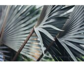 Palm Abstract, 8x12 Print, Nature Photography, Tropical Decor, Palm Trees, Palm Tree Art, Abstract Nature Photography, Green Art, Abstract