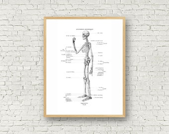 Skeleton Wall Art, Old Illustration, Black and White, Digital Art, Anatomy, Typography, Poster, Anatomic illustration, Profile, Skull, Bones