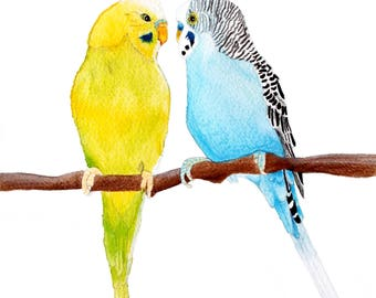 "Two Budgies Watercolour 10"" x 8"" Print"