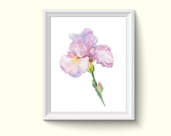 Purple Iris Flower Watercolour Painting Drawing Art Print N19