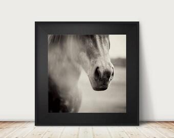 horse photograph animal photography black and white photography horse print horse art equestrian print animal print