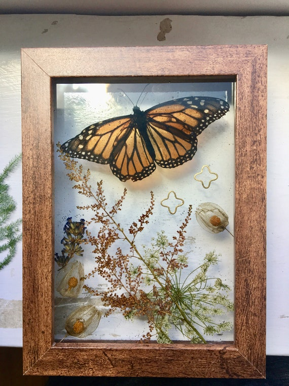 Real monarch, queen anne's lace, ground cherry wall hanging