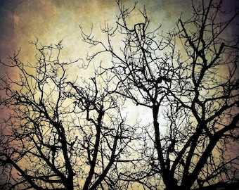 Black Tree Branches Backdrop - Halloween, scary woods, black trees - Printed Fabric Photography Background G1254