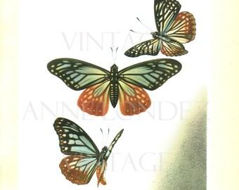 1950 Vintage tropical butterflies print Namida Vintage butterfly poster Hestina Nama butterfly art Buterfly decor