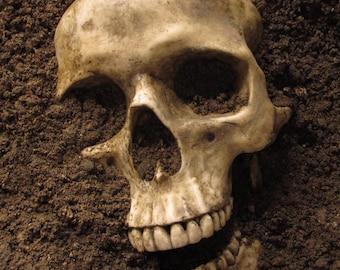 Realistic Replica Human Skull (Aged look)