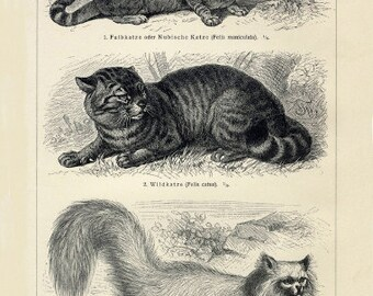 Cats Art Print - Animal Illustration - Vintage Style Wall Art - Museum Quality