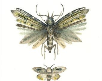 """Moths no. 3 8.5 x 11"""""""