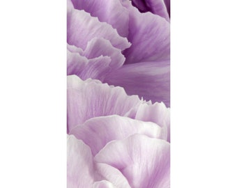 Petals of a Lavender Carnation Flower Photograph Matted to 10 X 20