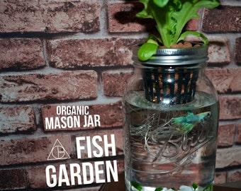 Mason Jar Fish Garden - Desktop Aquaponics and Sustainable Garden