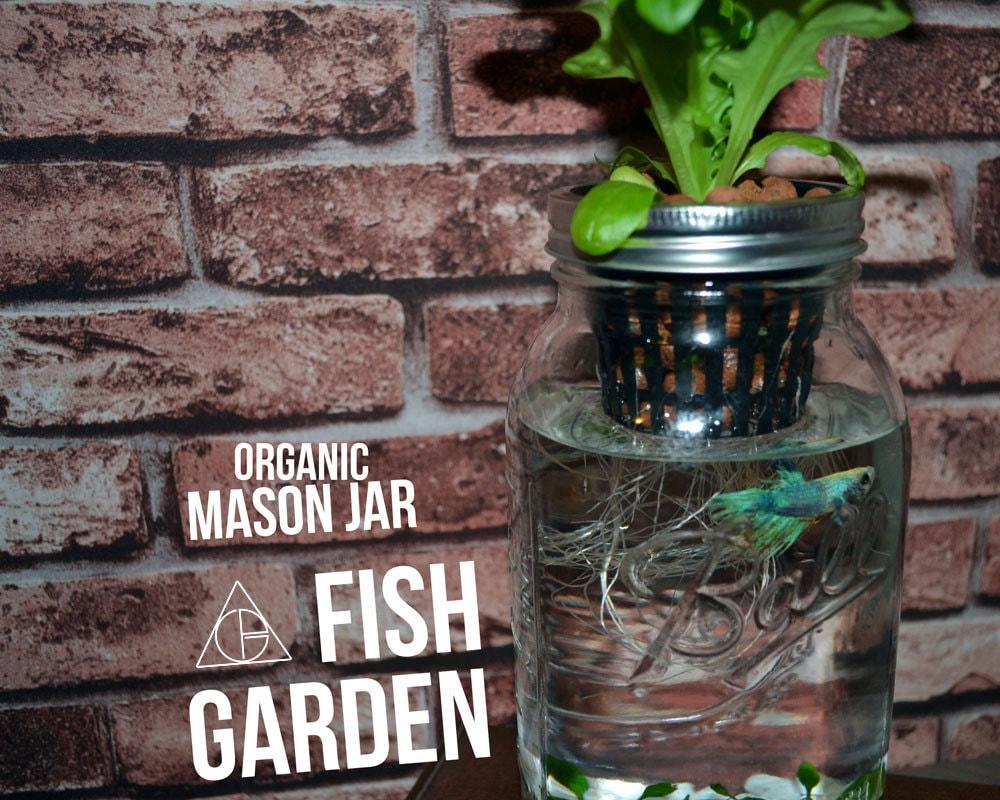 Mason Jar Fish Garden Desktop Aquaponics