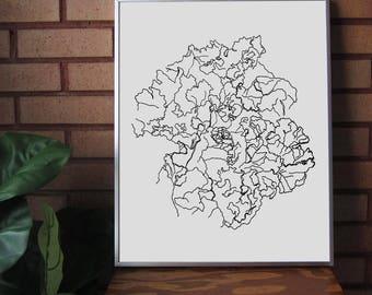 Kale Line Drawing