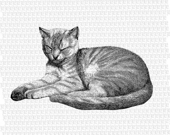Tabby Cat Digital Graphic KHigh Quality Illustration Printable Cat Image Instant Download 2260