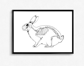 Rabbit Art Print (Anatomy) - Bunny Poster - Rabbit Skeleton Print - Bunny Ink Drawing / Anatomy Wall Art, Science Poster, Veterinarian gift