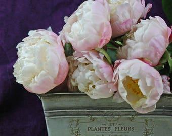 Paris peony photo, pink peony print,farmhouse decor, peony art, pink peony photo, French peony, shabby cottage decor, pink flower photo