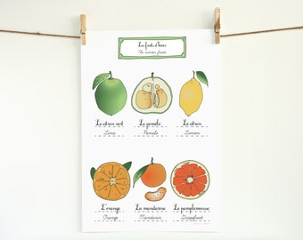 Winter Fruits Kitchen Art Poster - 13x19 Giclee art print - French Retro Kitchen home decor botanical Gift for her orange yello green