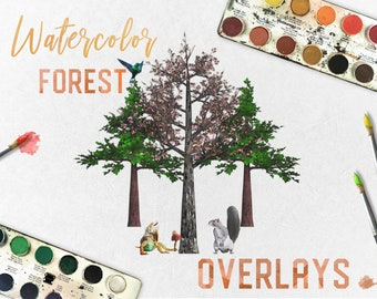 Watercolor Forest Elements Pack, Separate PNG Files, High Resolution, Instant Download.