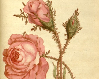 Flower painting, Botanic art, Botanical chart, Beautiful flowers, 69