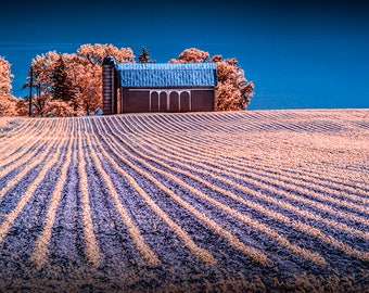 "Farm Field Rows, Red Barn, Farm Silo, Infrared Photograph, Patterns, West Michigan, Fine Art, Agricultural Photograph, ""Farm Field Rows"""