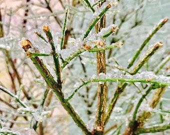 L'hiver #4 congelés branches panoramiques hiver photo