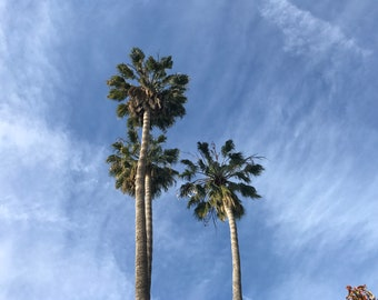 Palm Trees Photo #2