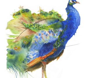 Flourish - Peacock, Beautiful Bird, Multi color, Wildlife, Animal, Watercolor Painting Available in Paper and Canvas by Olga Cuttell