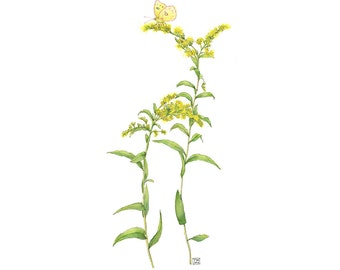 Yellow Goldenrod with Butterfly, Watercolor Botanical Illustration, Art Print