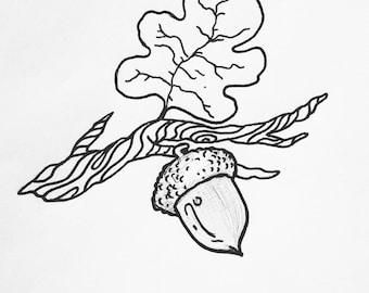 Acorn Twig
