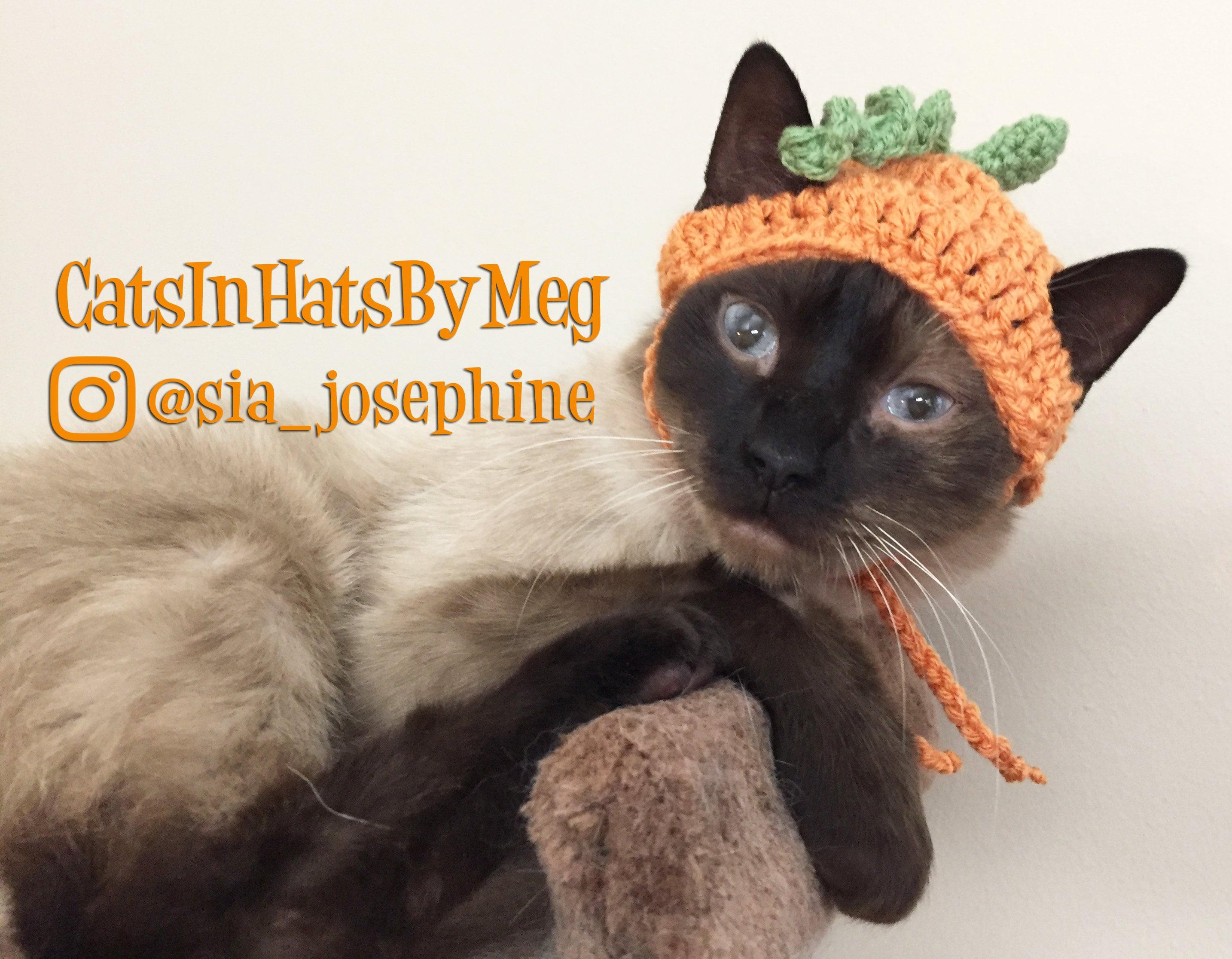 Handarbeit häkeln Kürbis Hut für Katzen