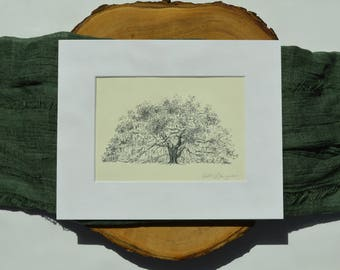 Tree Art Print - Majestic Oak Savannah, Georgia - Line Drawing on Natural Paper