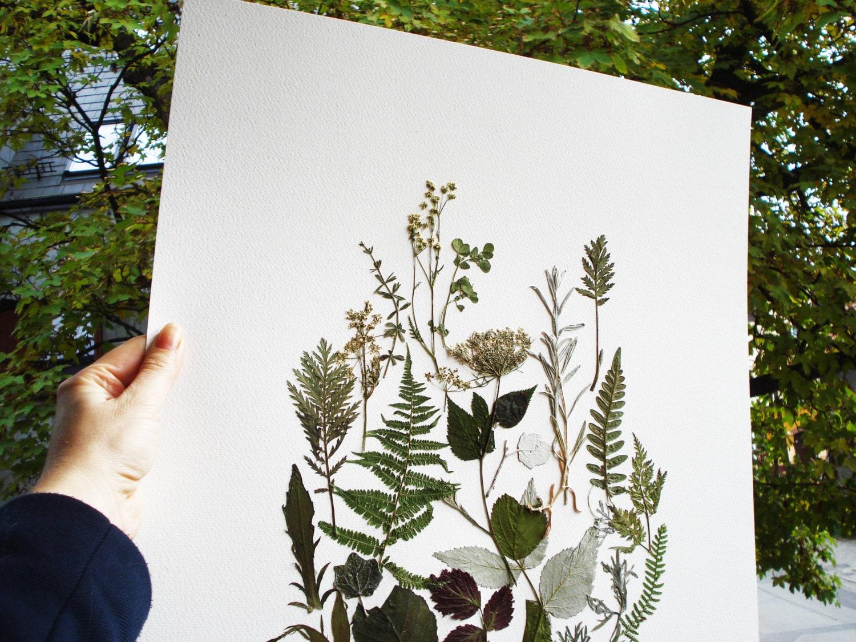 Blumen Kunstdrucke print Pflanze Herbarium Druck botanischen