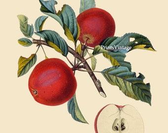Red Apples Printable Art, Apple Print, Fruit Print, Apple Printable Art, Watercolor Print, Vintage Art, Printable Image, Instant Download