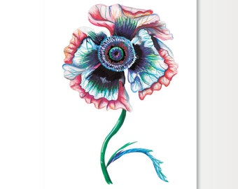 Limited Edition Print of Poppy