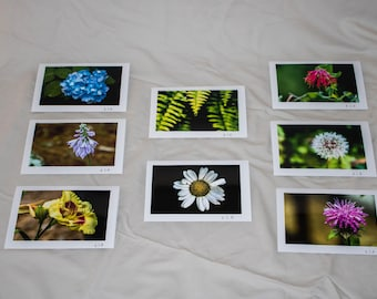 Floral Greeting Cards (pack)