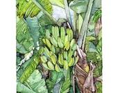 Banana Tree Painting - Pr...