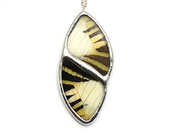 Graphium Antiphates Real Butterfly Wing Pendant Real Butterfly necklace Real Butterfly Wing Jewelry Fall Inspired Jewelry Autumn Colors