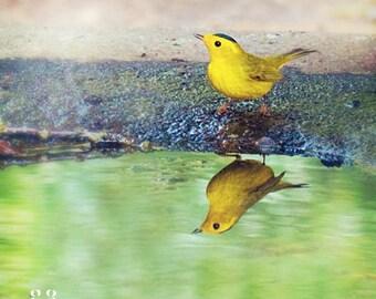 Yellow Bird Photo Print - wilson's warbler, bird lovers, easter gift, housewarming, bird photography, farmhouse wall art, bird home decor