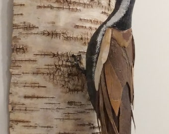 Pileated Woodpecker on Birch
