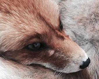 Custom Fox Soft Mount